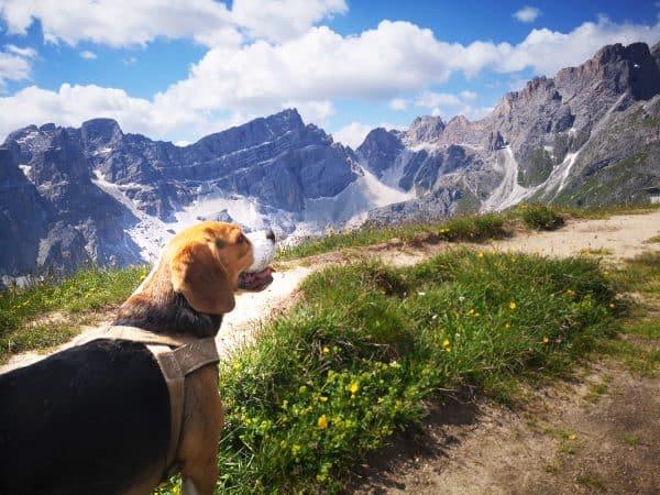 Mit dem Hund auf Bergtour